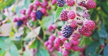 Het seizoensfruit van oktober